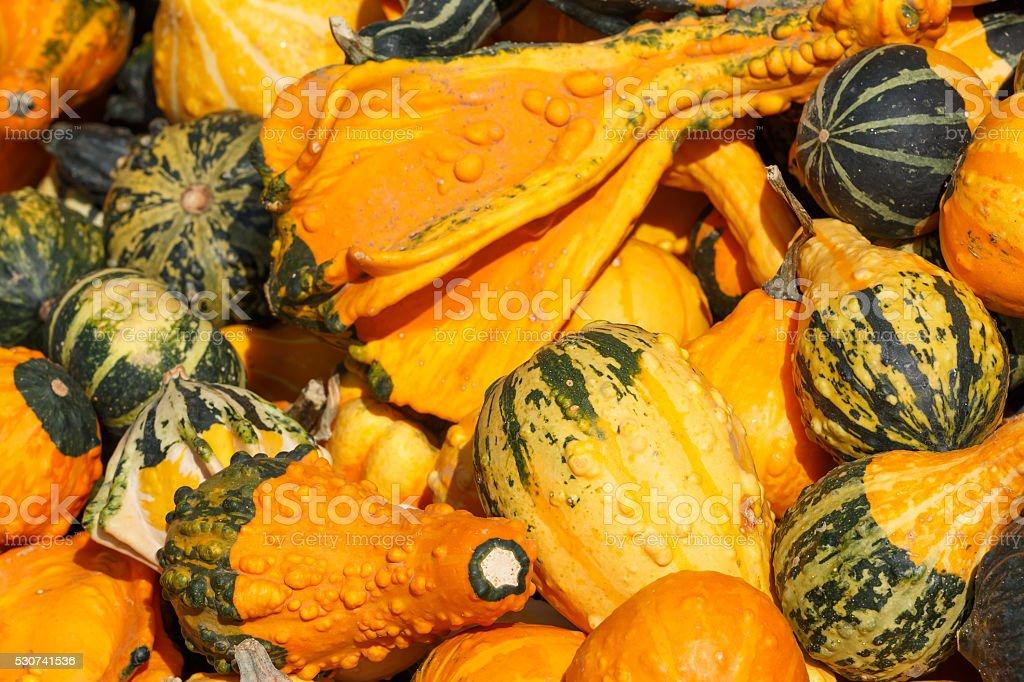 Detail view of various pumpkins stock photo