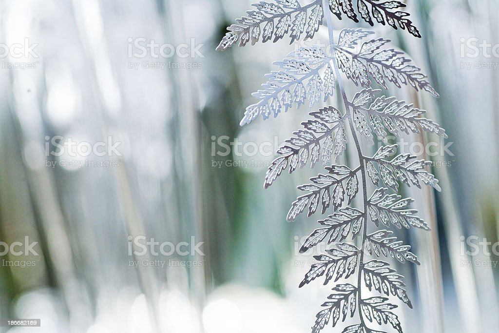 Detailed and fragile silver fern leaf ornament stock photo