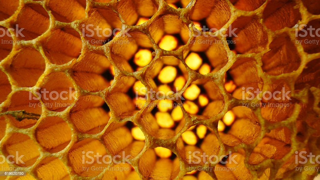 Detailed beehive stock photo