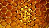 Detailed beehive