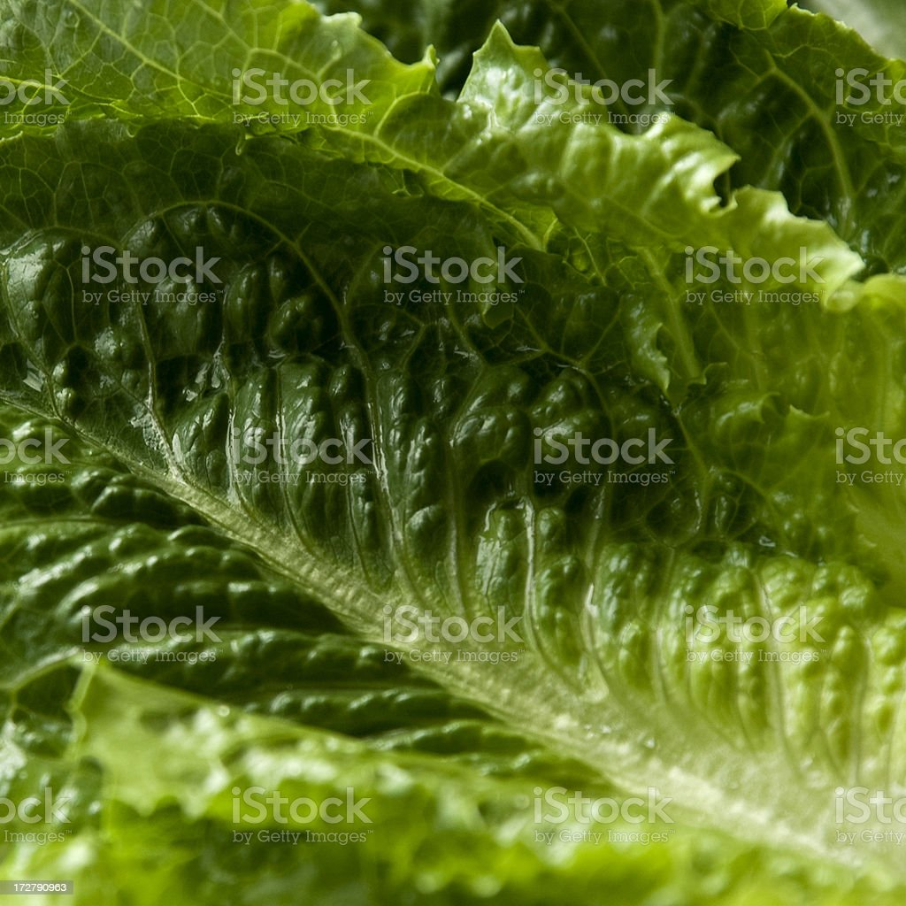 Detailed close up of crisp romaine lettuce leaves. royalty-free stock photo