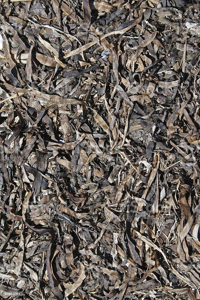 Des algues séchées photo libre de droits
