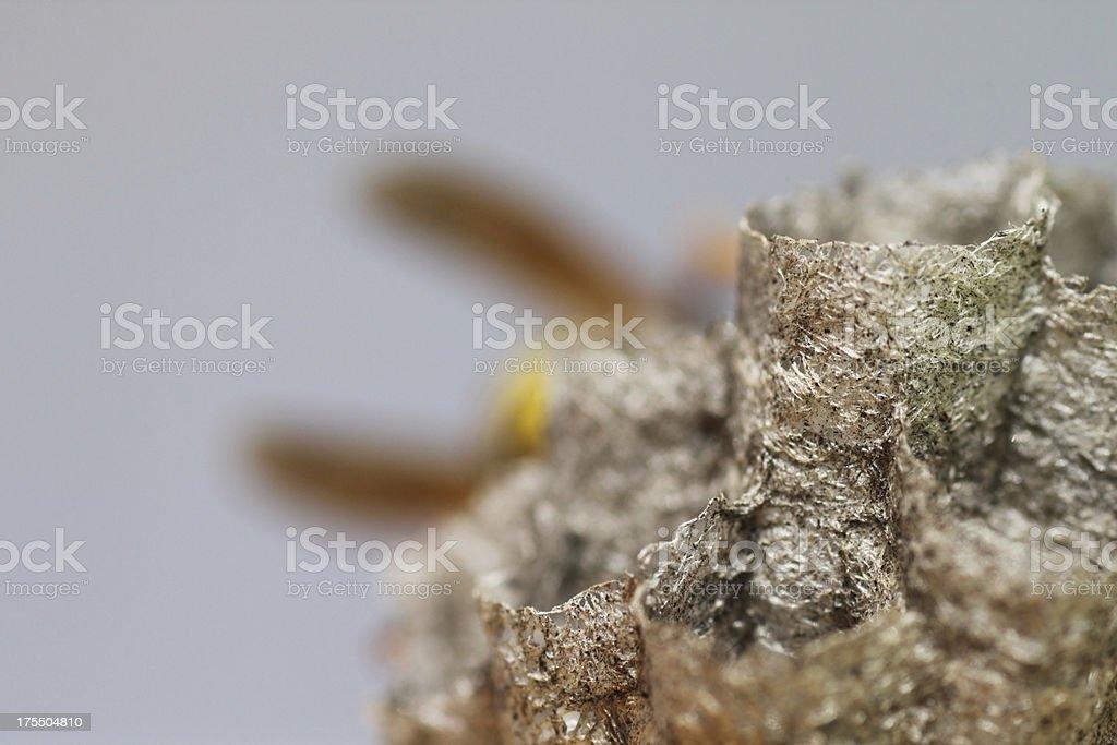 detailed hornet nest stock photo