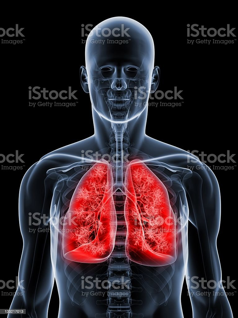 detailed lung illustration stock photo