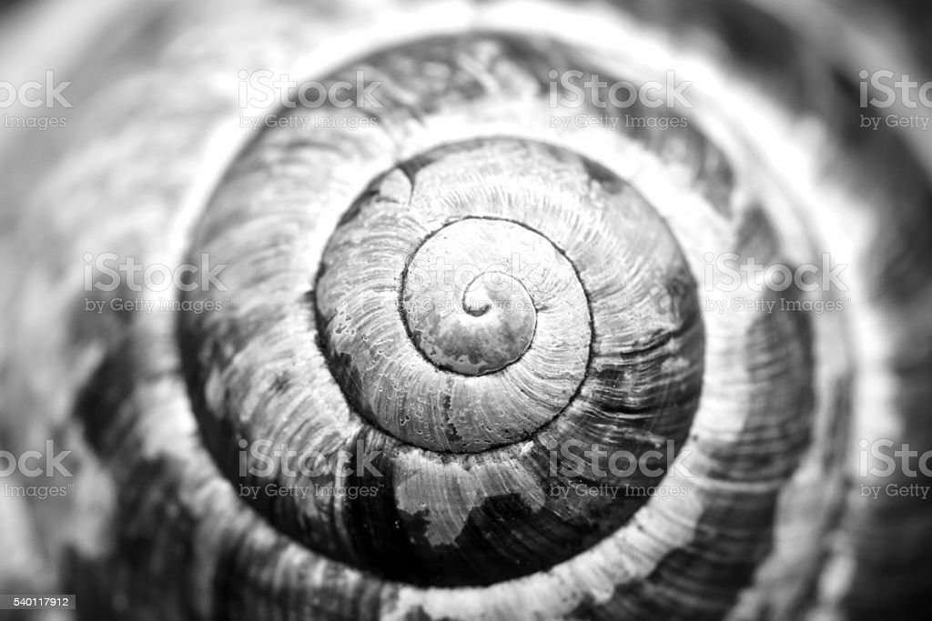 detailed natural spiral shell black and white photo stock photo