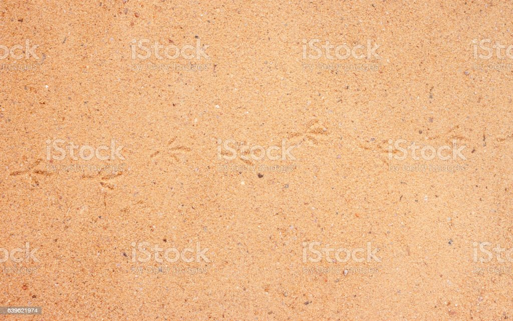 detailed texture of sand surface stock photo