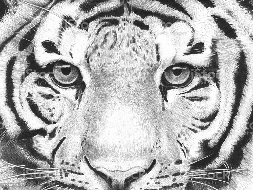 Detailed Tiger Illustration royalty-free stock photo
