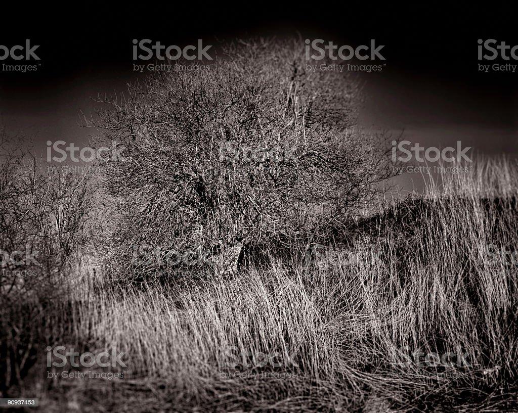 Detailed Tree stock photo