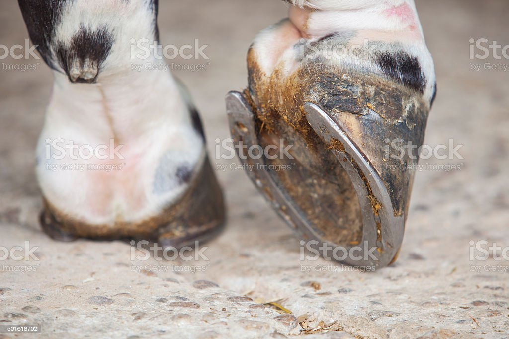 Detailed view of horse foot hoof outside stables stock photo