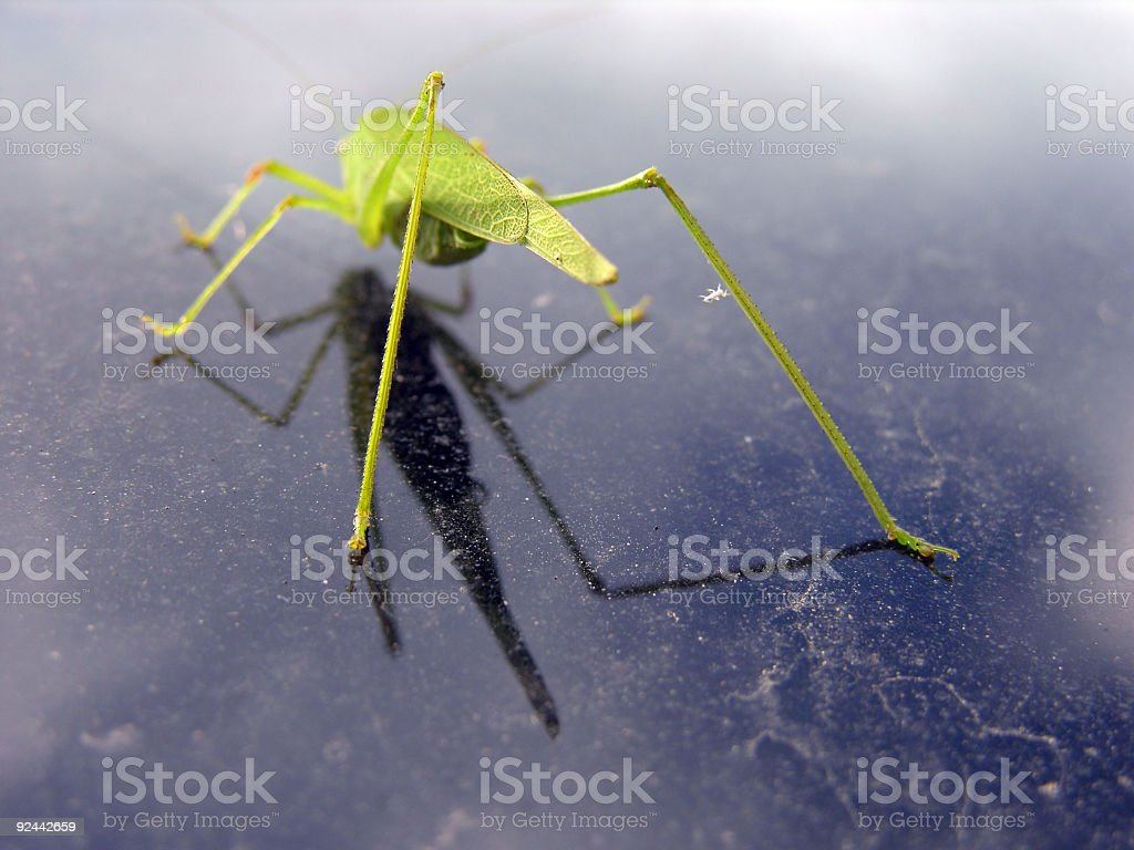 Details Of An Insect royalty-free stock photo
