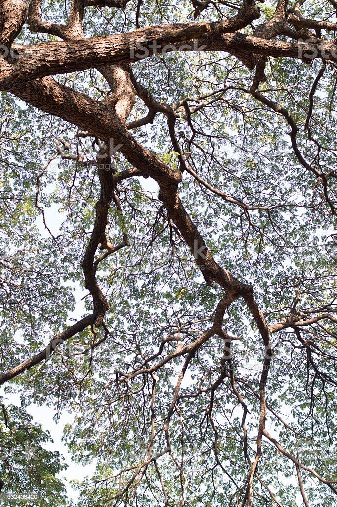 Детали зеленый и филиалом дерево листья фон Стоковые фото Стоковая фотография