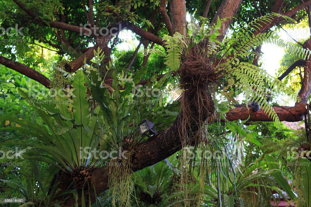 Details of green leaf and branch tree foliage Стоковые фото Стоковая фотография