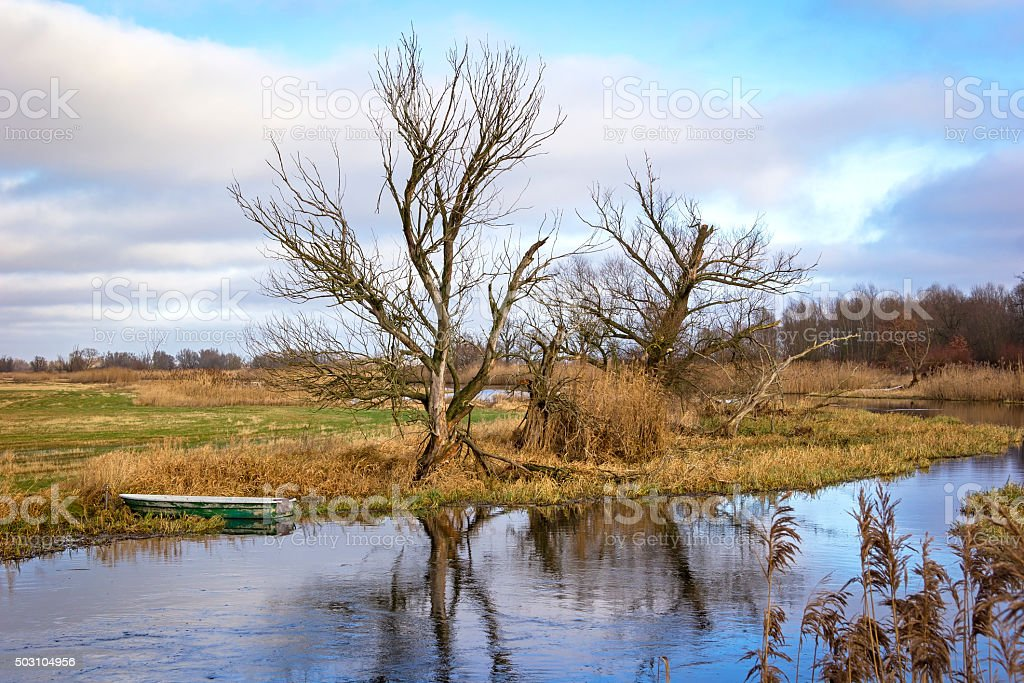 Details of Reed in Winter. stock photo