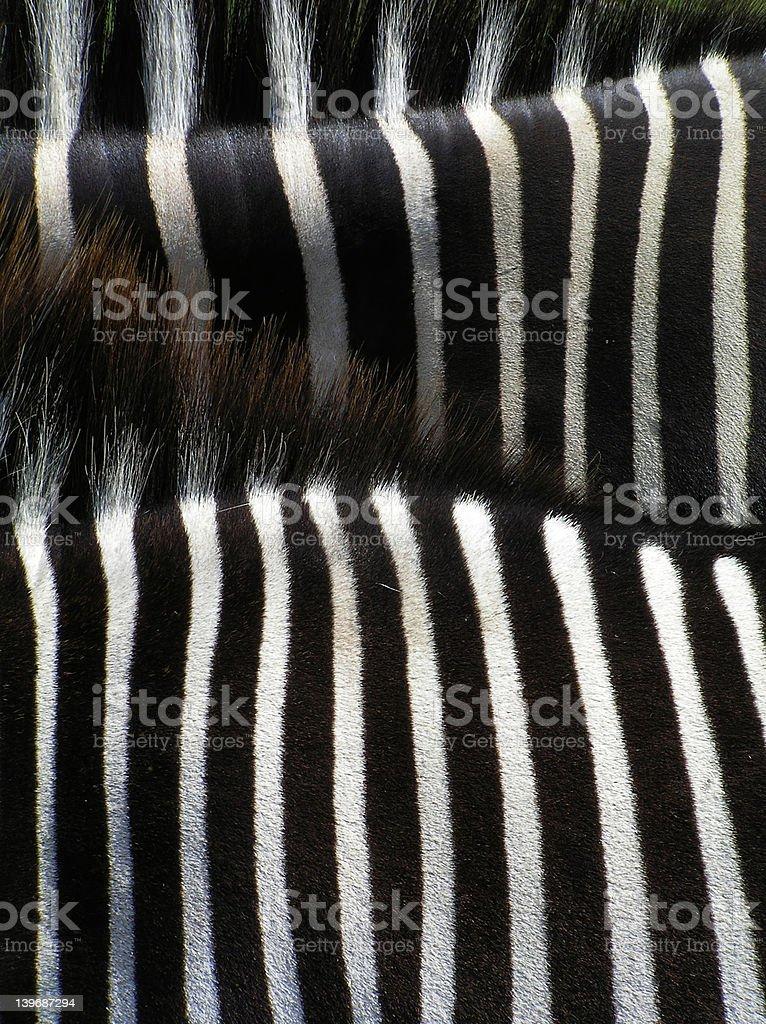 Details of zebra stock photo