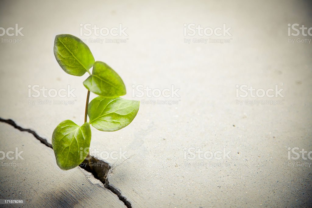 Determination: Plant Growing royalty-free stock photo