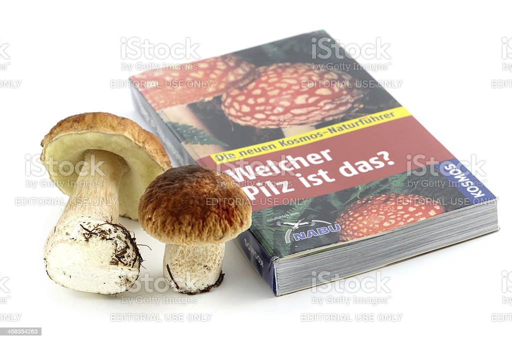 Determining species of fungi in mushroom book. royalty-free stock photo
