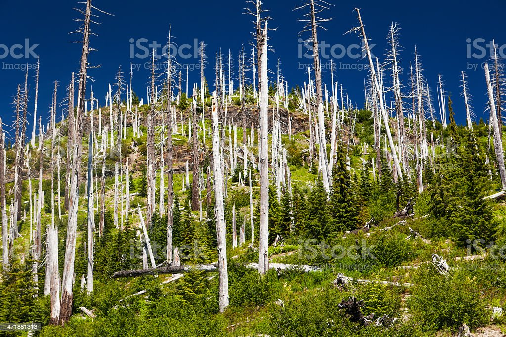 Devastated area of Mount St. Helens stock photo
