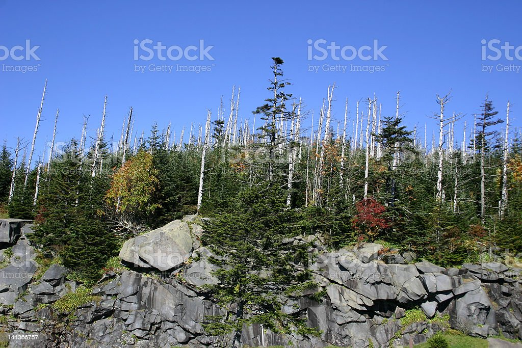 Devastated Forest - Clingman's Dome stock photo