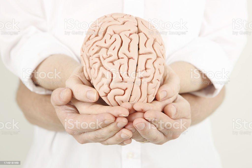 Developing brain royalty-free stock photo