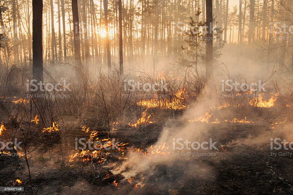 Development of forest fire on sunset background stock photo