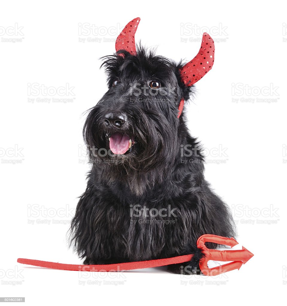 Devil dog royalty-free stock photo