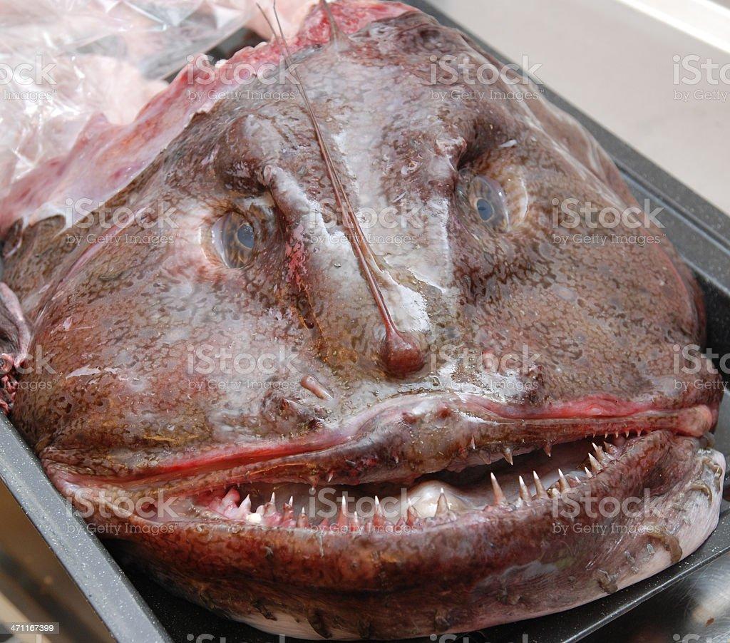 devilfish monster face stock photo