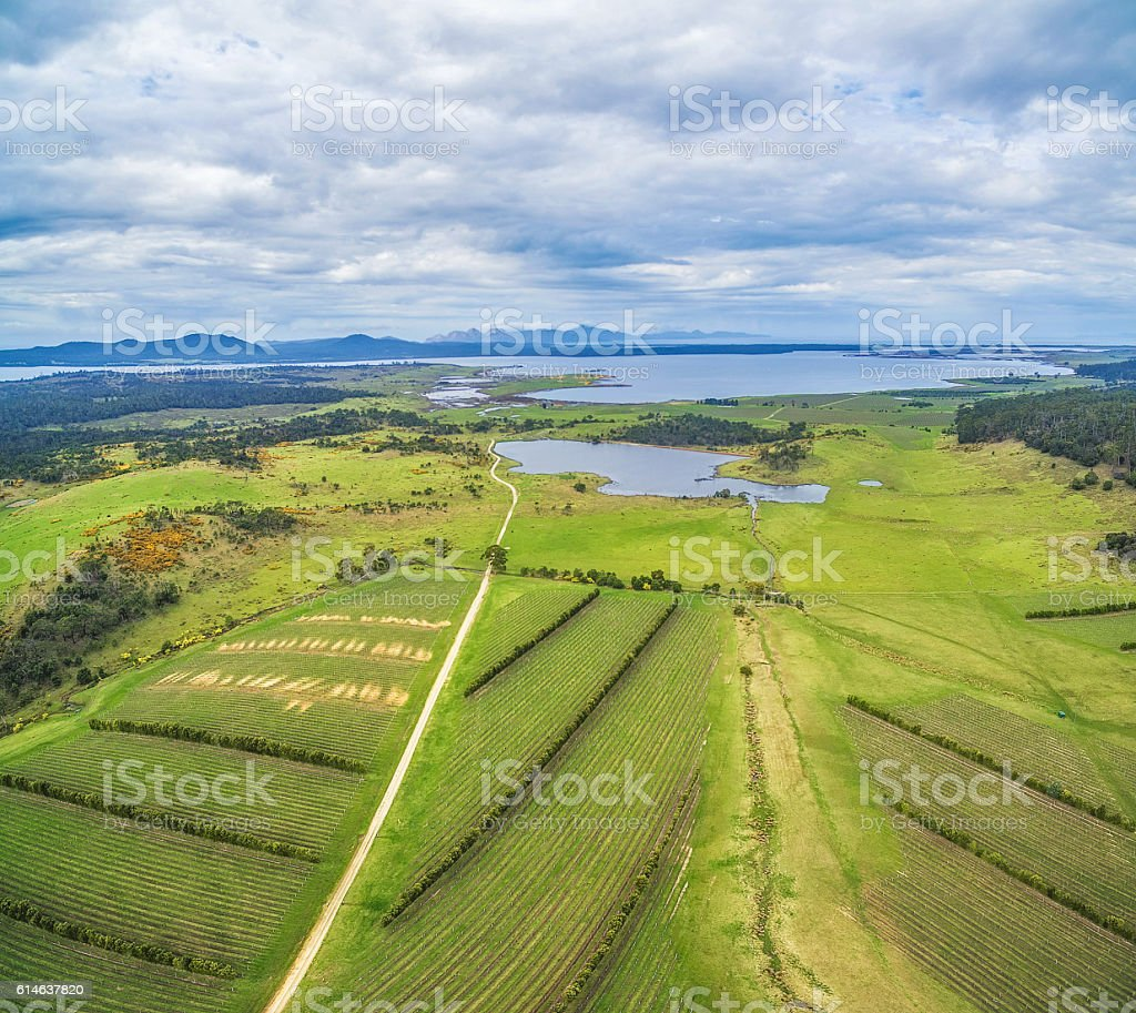 Devil's Corner winery aerial view stock photo