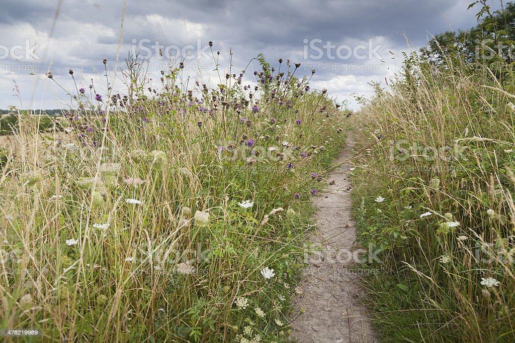 Devils Dyke, East Anglia, UK royalty-free stock photo