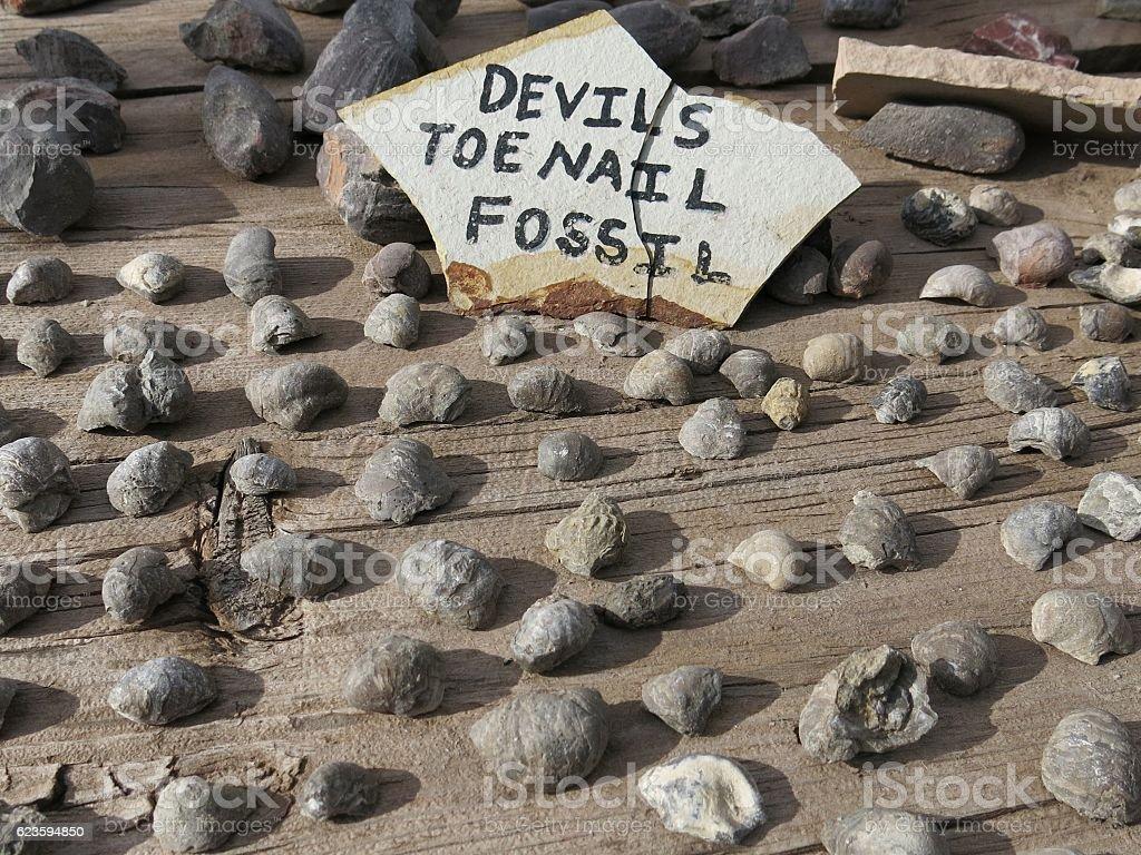Devils Toenail Gryphaea Extinct Marine Oyster Fossil Heals Rheumatism stock photo