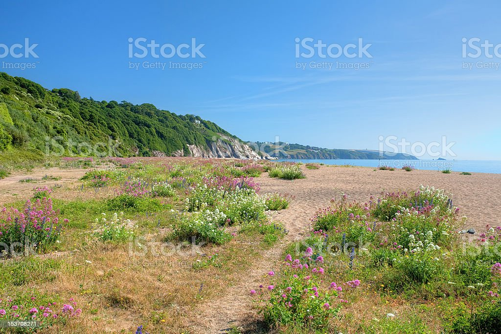 Devon beach in summer stock photo