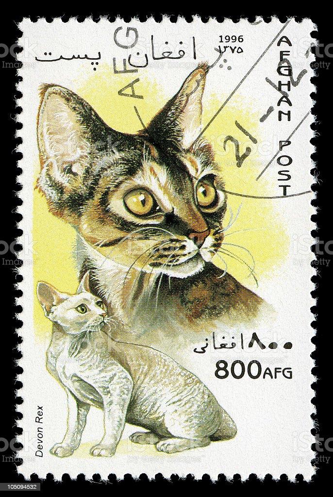 Devon Rex Cat Stamp of Afghanistan stock photo