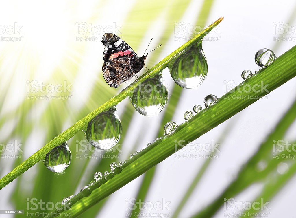 dew and butterfly royalty-free stock photo