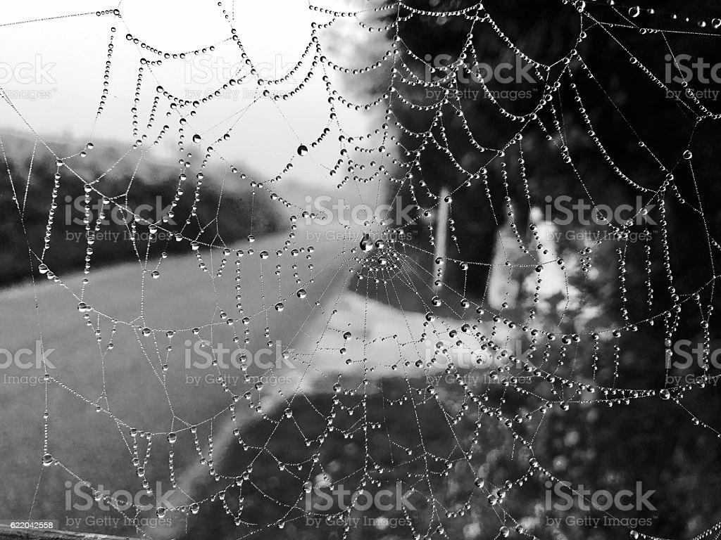 Dew covered cobweb stock photo