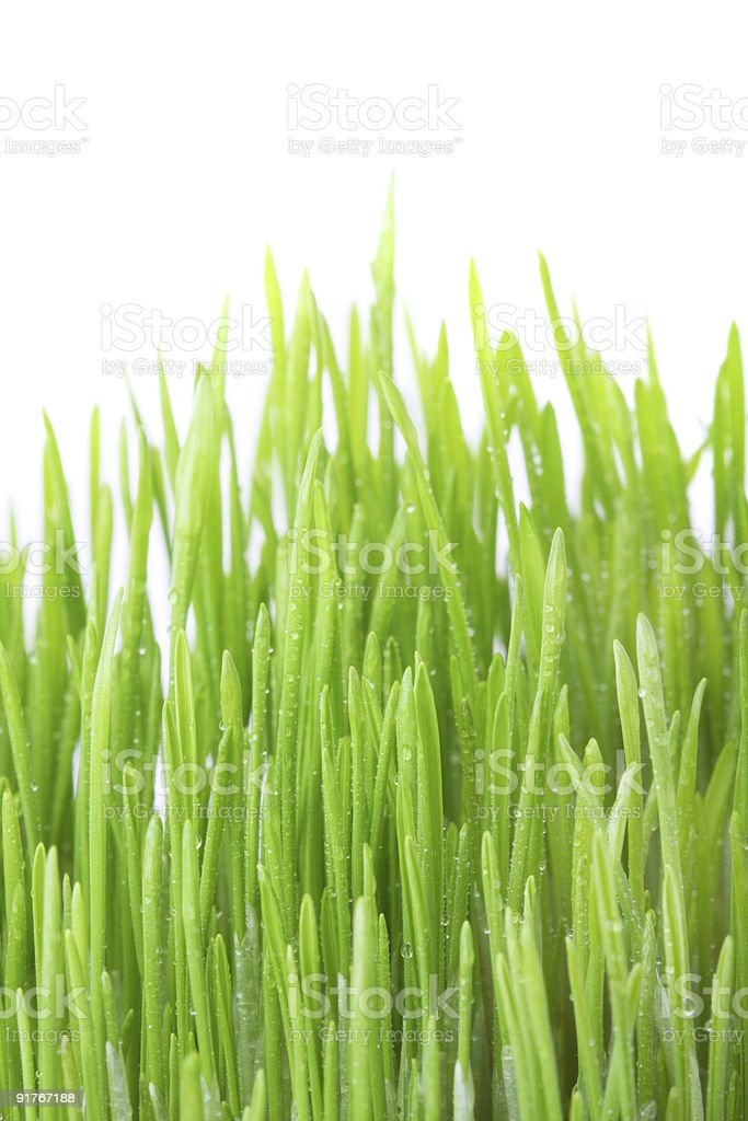 Dew covered grass royalty-free stock photo