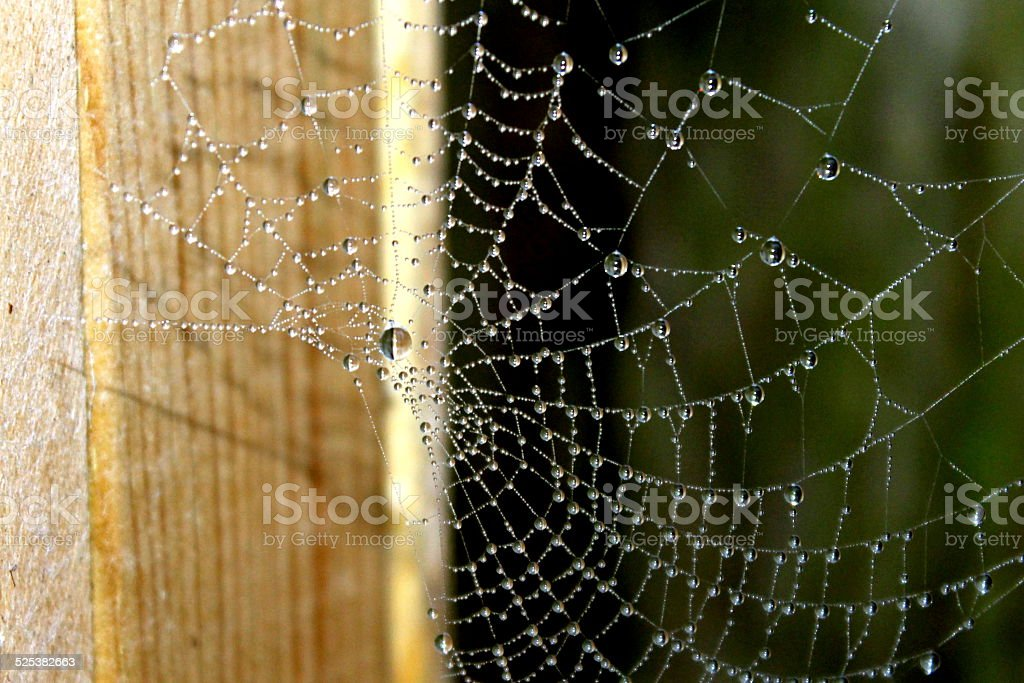 Dew drop covered spider web on wooden post stock photo