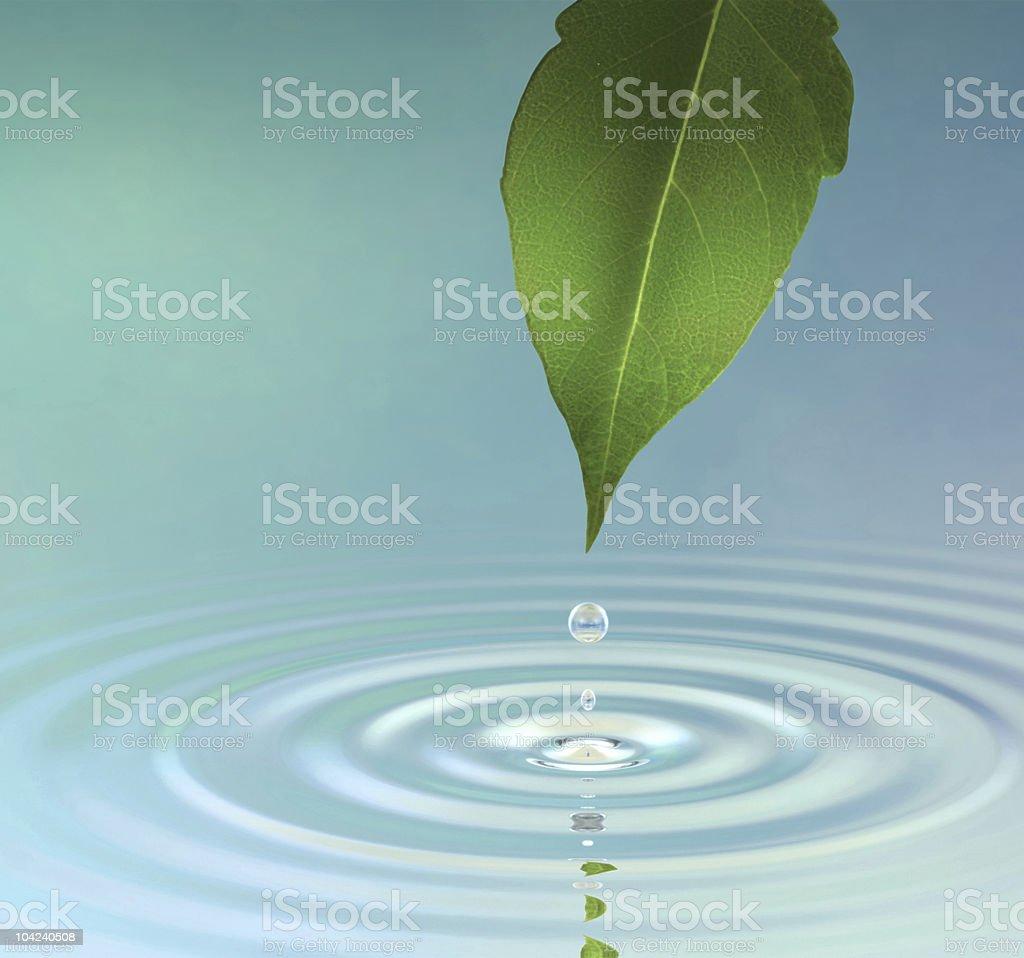 Dew Drop royalty-free stock photo