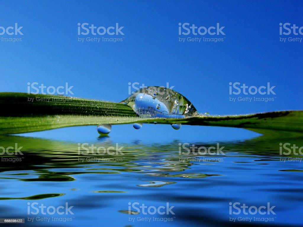 Dew drop stock photo