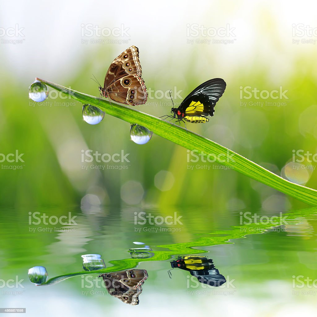dew drops and butterflies stock photo