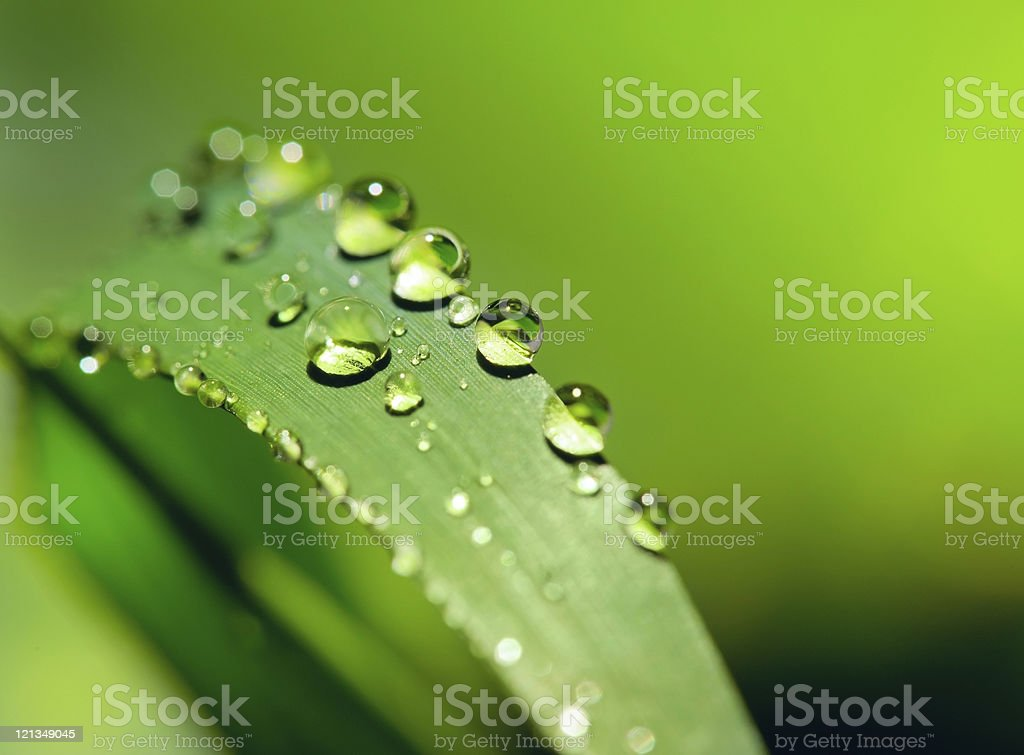 Dew drops on a green grass stock photo