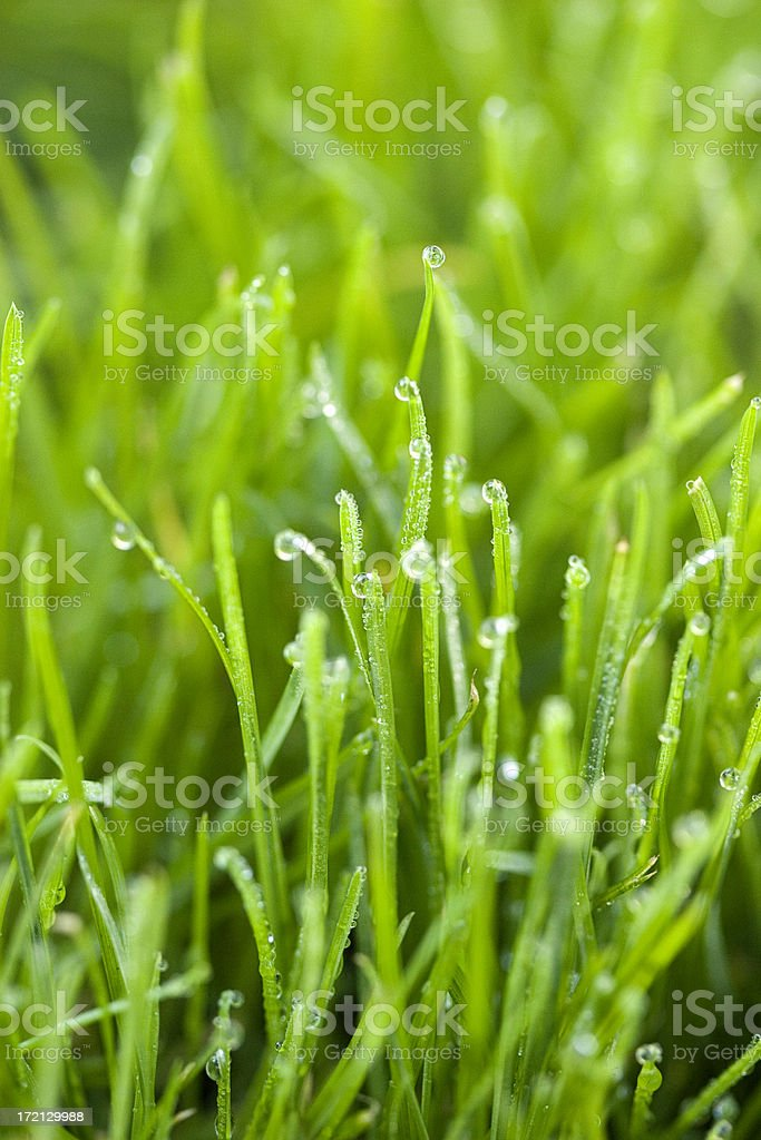 Dew drops on blades of grass in close up royalty-free stock photo