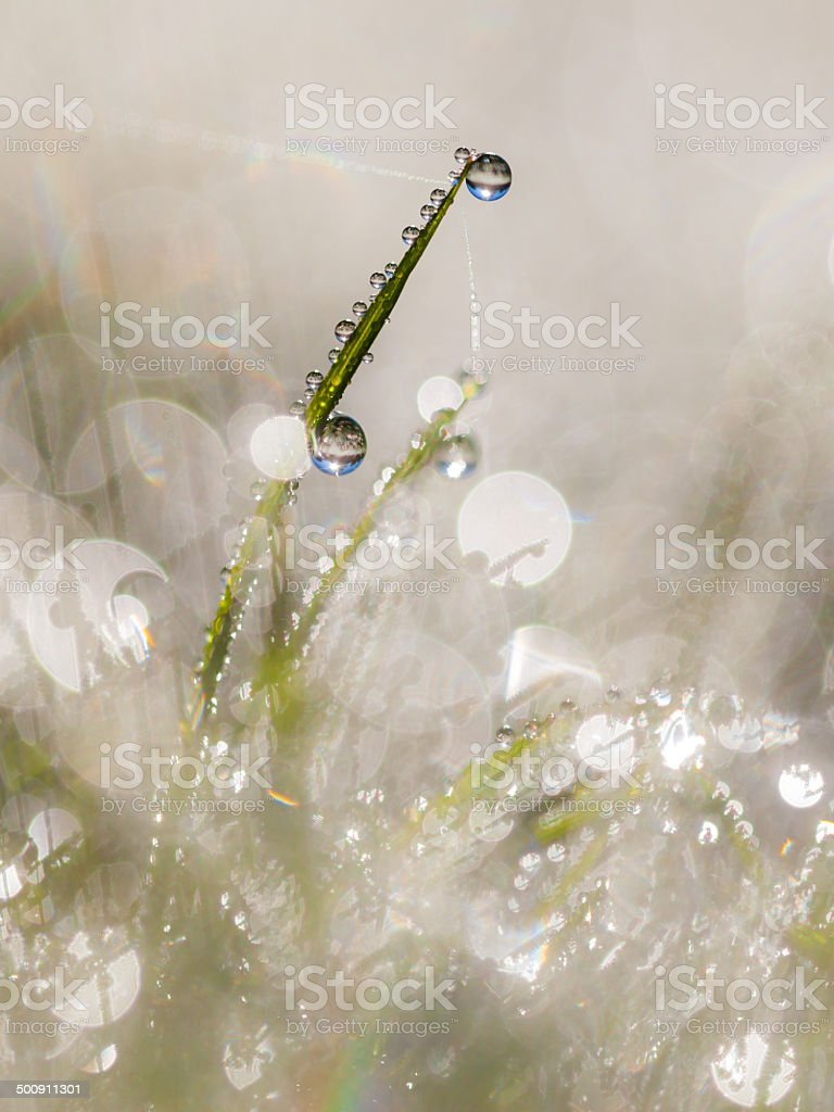 Dew Drops on Grass Blade in the Early Morning Beautiful stock photo