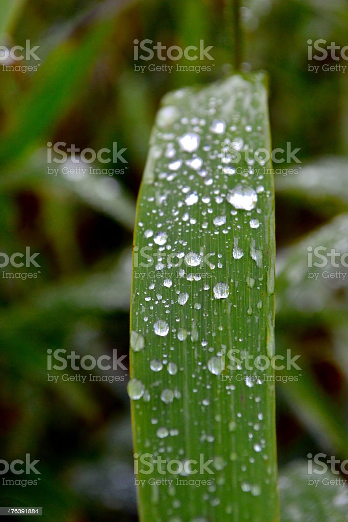 Dew drops on grass stock photo