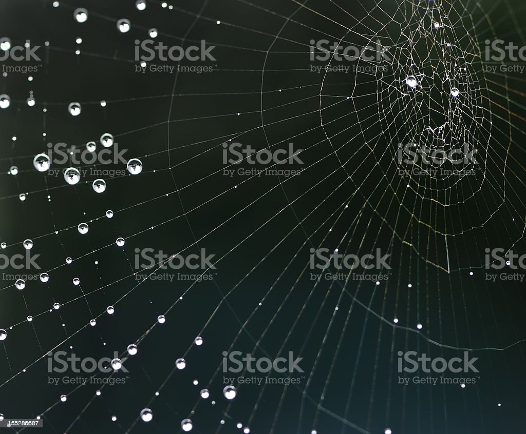 Dew drops on shimmering spider web stock photo