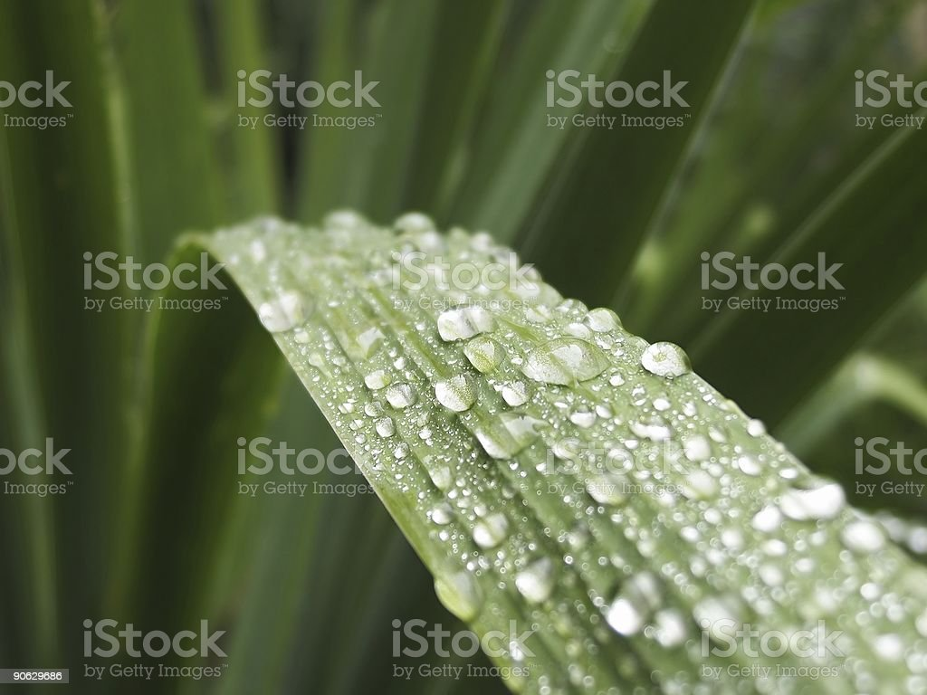 Dew drops on the leaf royalty-free stock photo