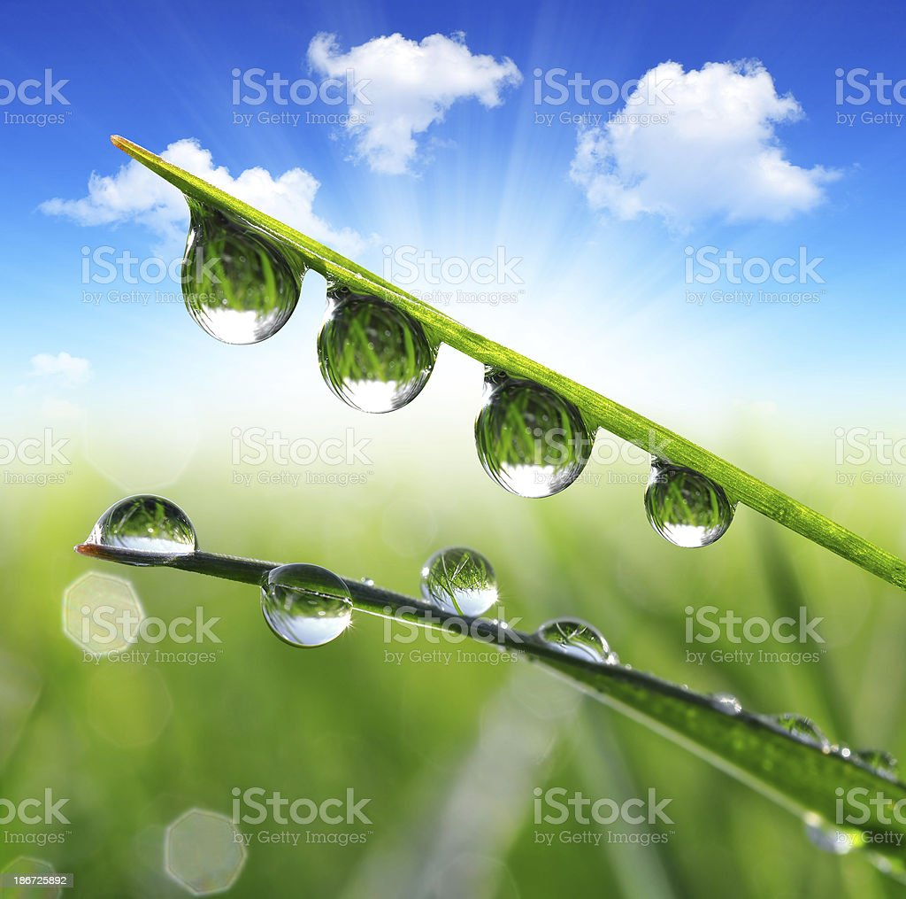 dew drops royalty-free stock photo