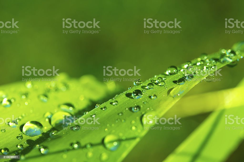 dew drops stock photo