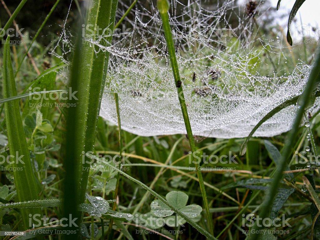 Dew drops stock photo