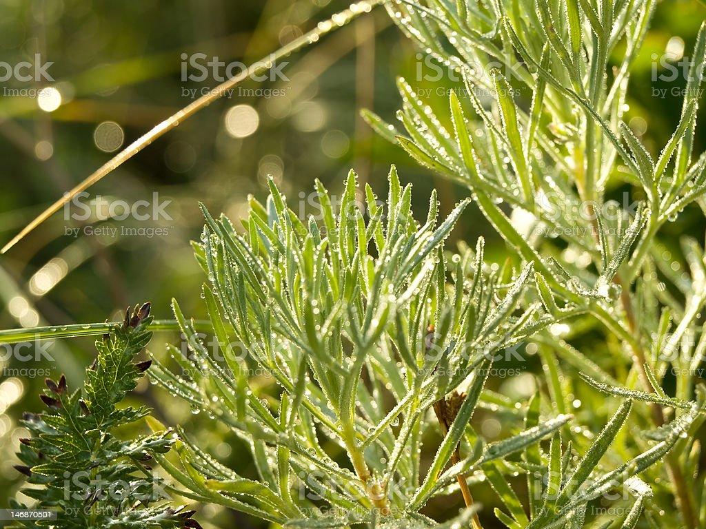 dew, grass royalty-free stock photo