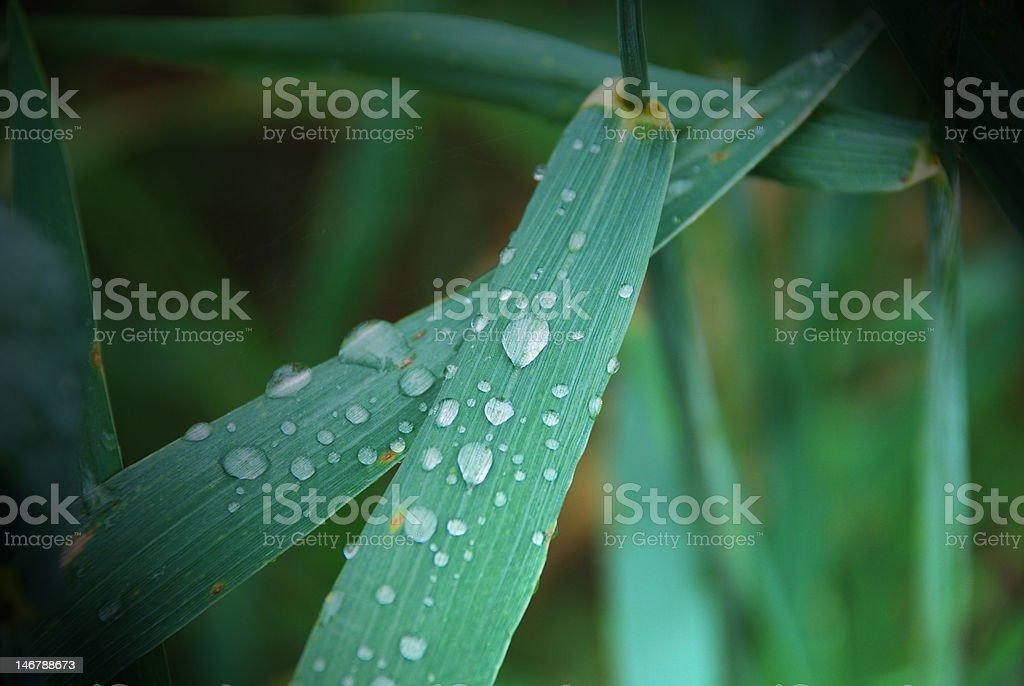 Dew of life stock photo