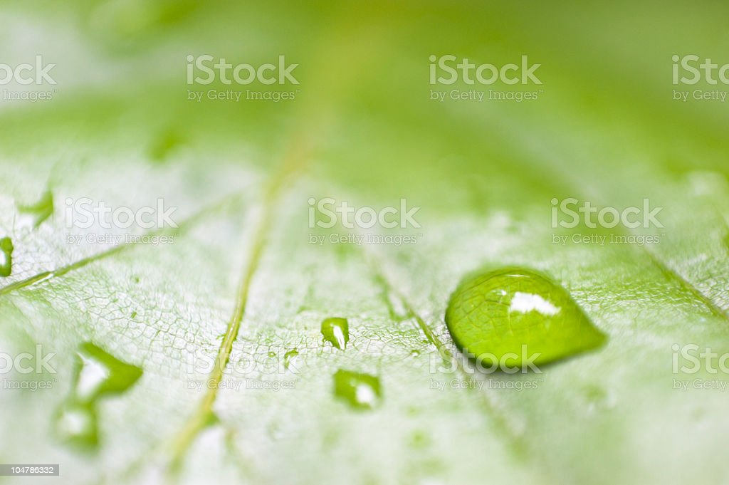 dew on a leaf royalty-free stock photo